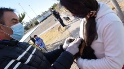 Vacunacion antirrabica y antiparasitaria para mascotas en zona sur del departamento.